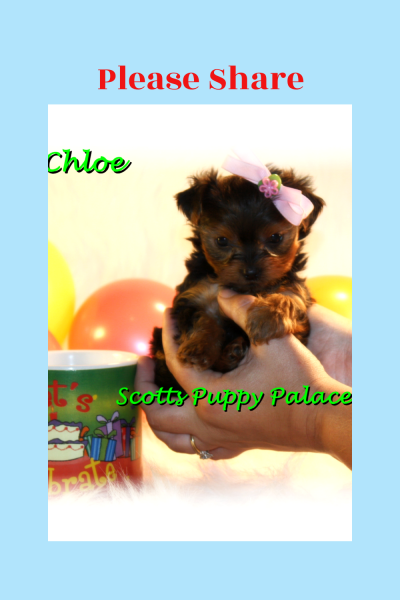 Puppies for sale in AZ