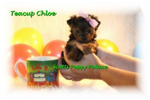 Puppies for sale up to $100, $200, $300, $400, $500 and more.