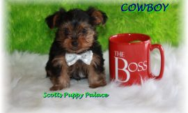 Teacup Puppies and Dogs For Sale in Marion, Ohio