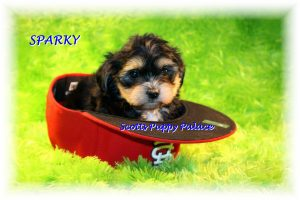 Puppies For Sale in United States Under $200